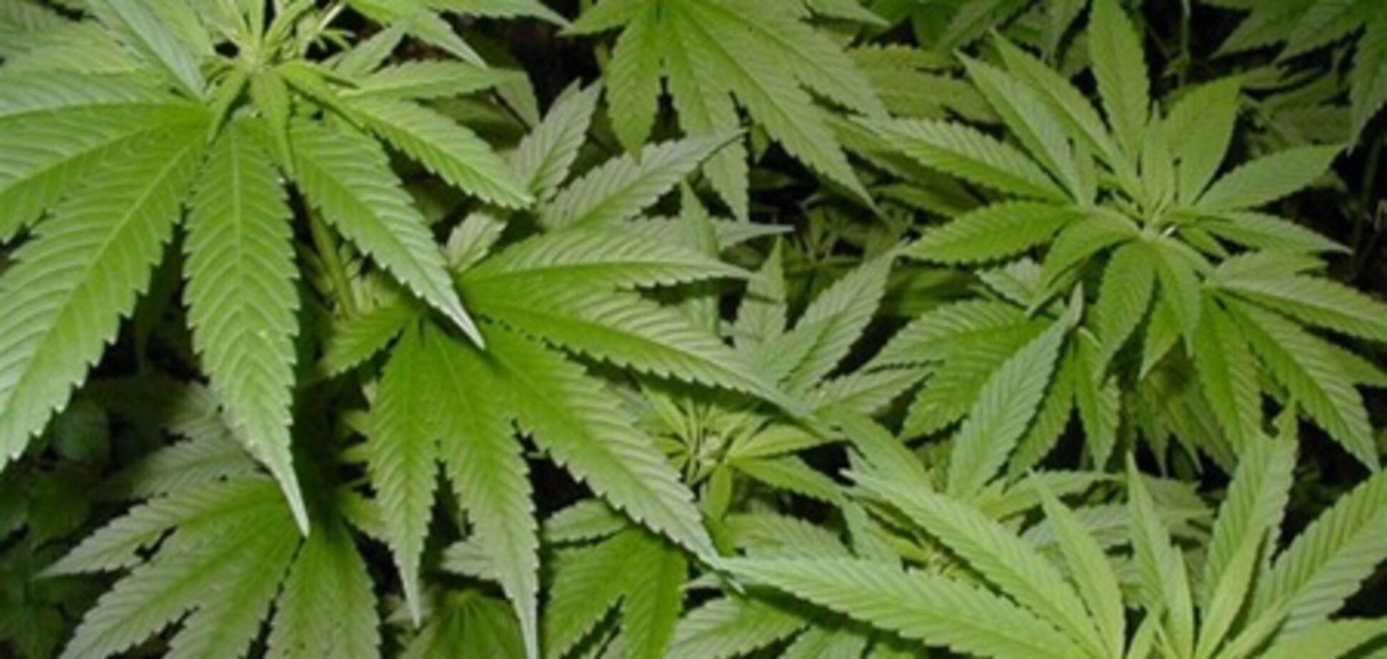 В Арізоні відкрився супермаркет для охочих самостійно вирощувати марихуану