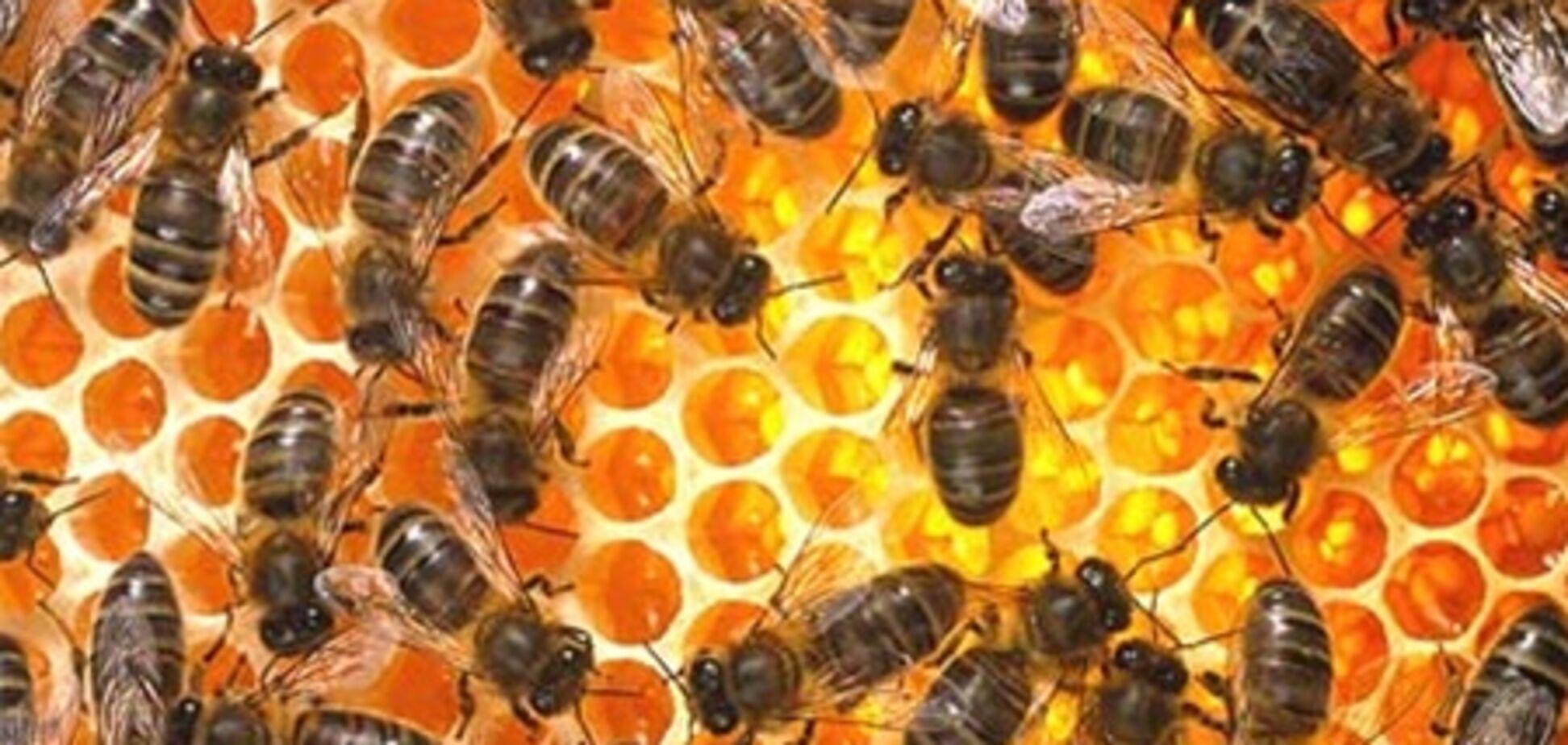 Француз-невдаха погорів на крадіжці 150 бджолиних вуликів