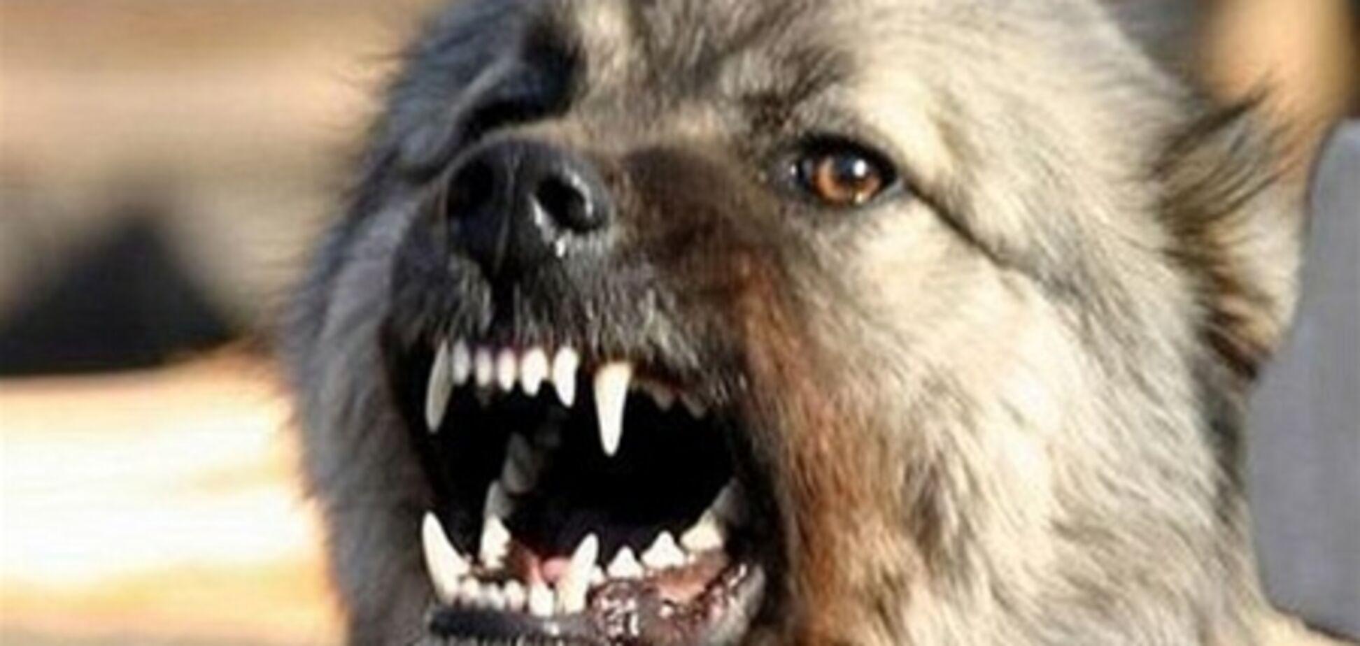 Собака – враг человека?!