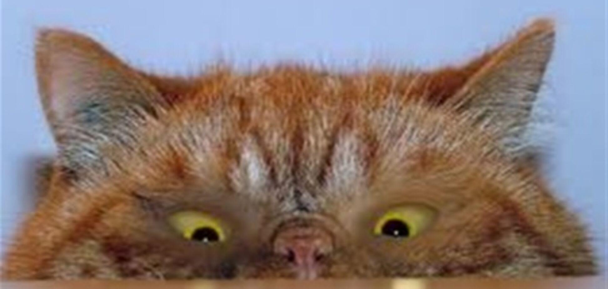 Вчені: турбує кішка? Вам потрібен тільки офісний затискач. Відео