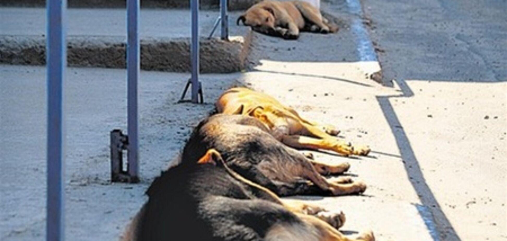 Собачья жизнь в Крыму: регистрация, кастрация или ликвидация