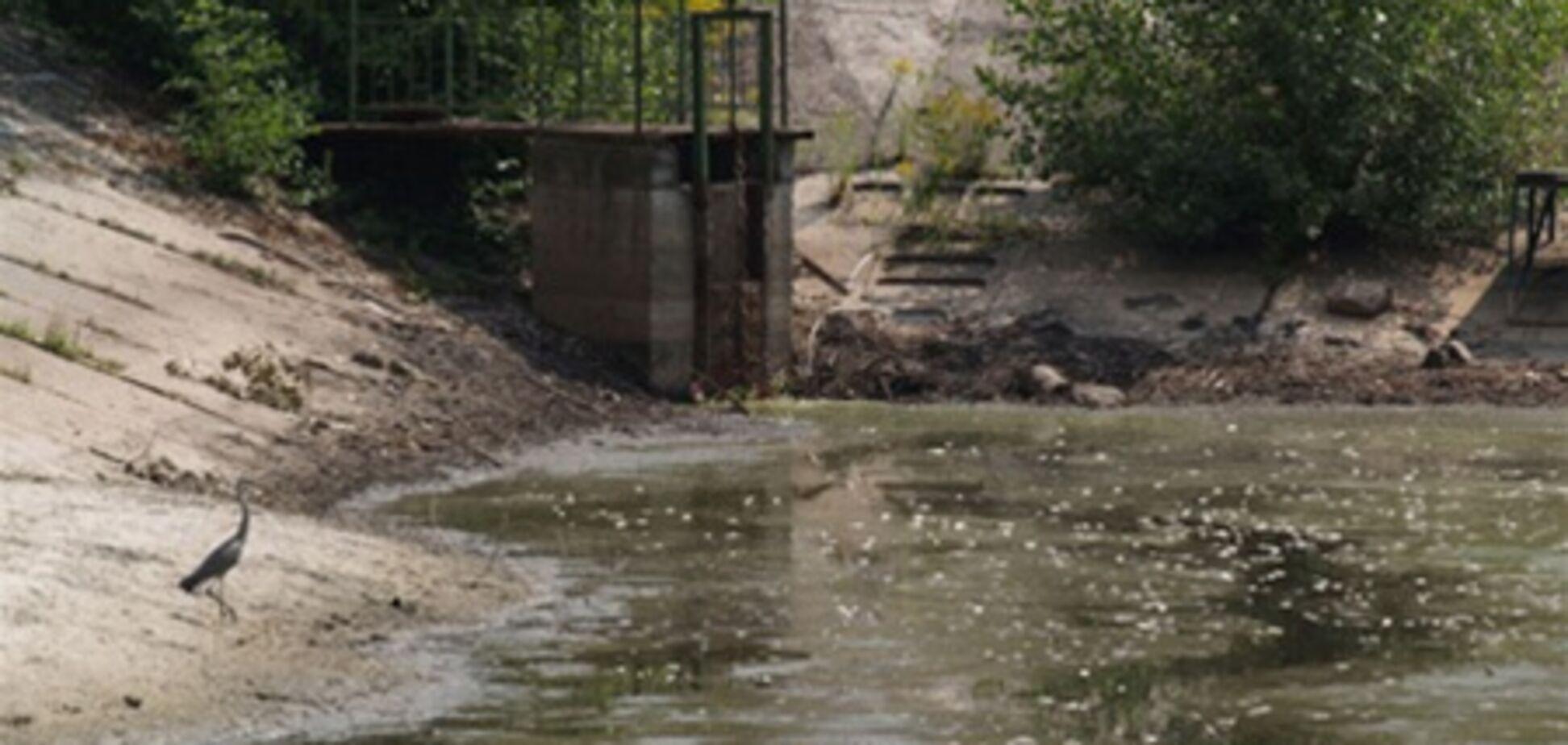 В центре Киева появился пруд мертвой рыбы