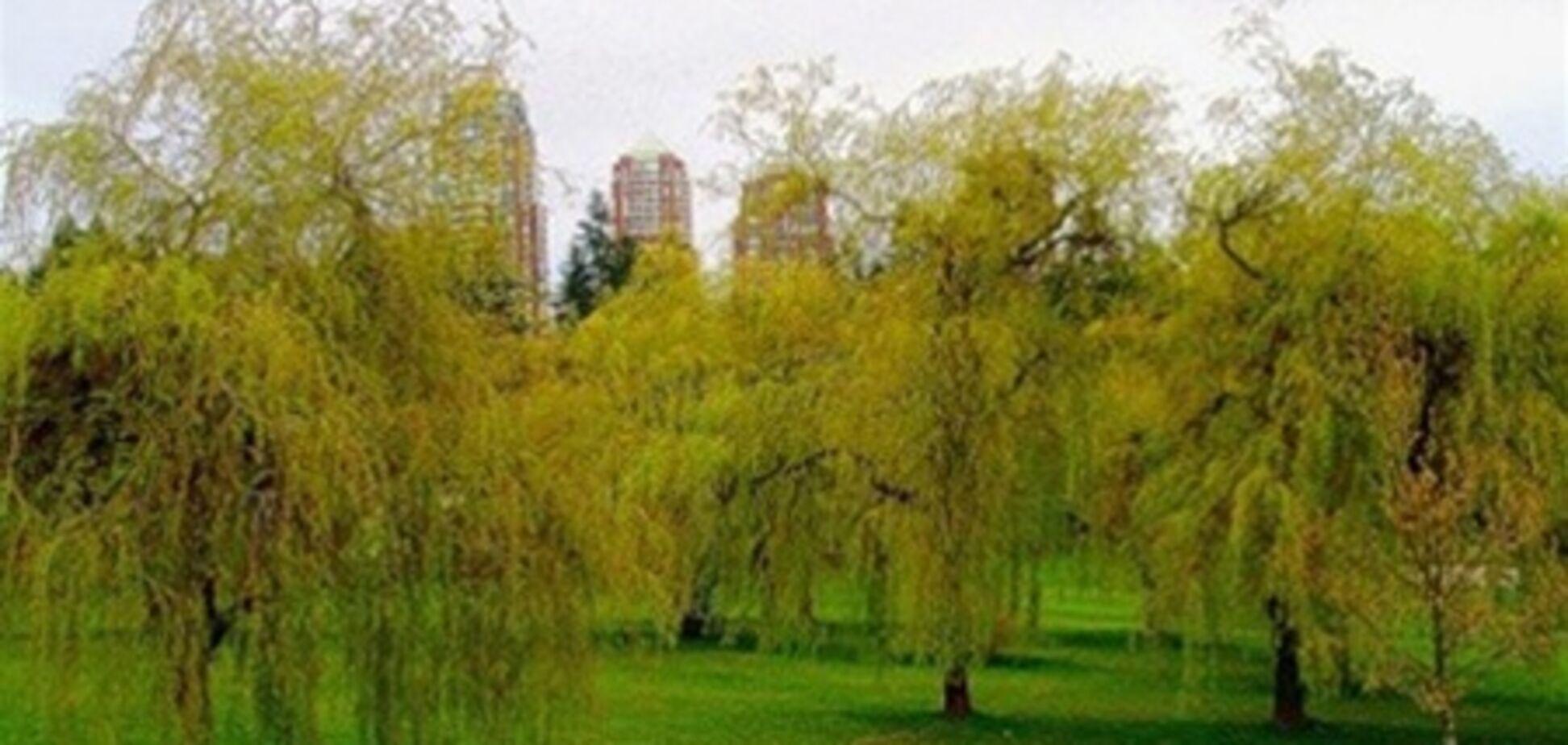 В Киеве высадят ивовый парк