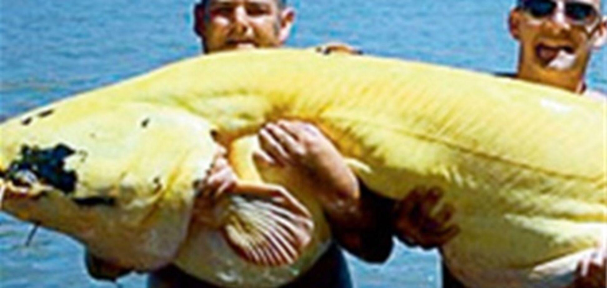 Акулу-мутанта виловили в Мексиці
