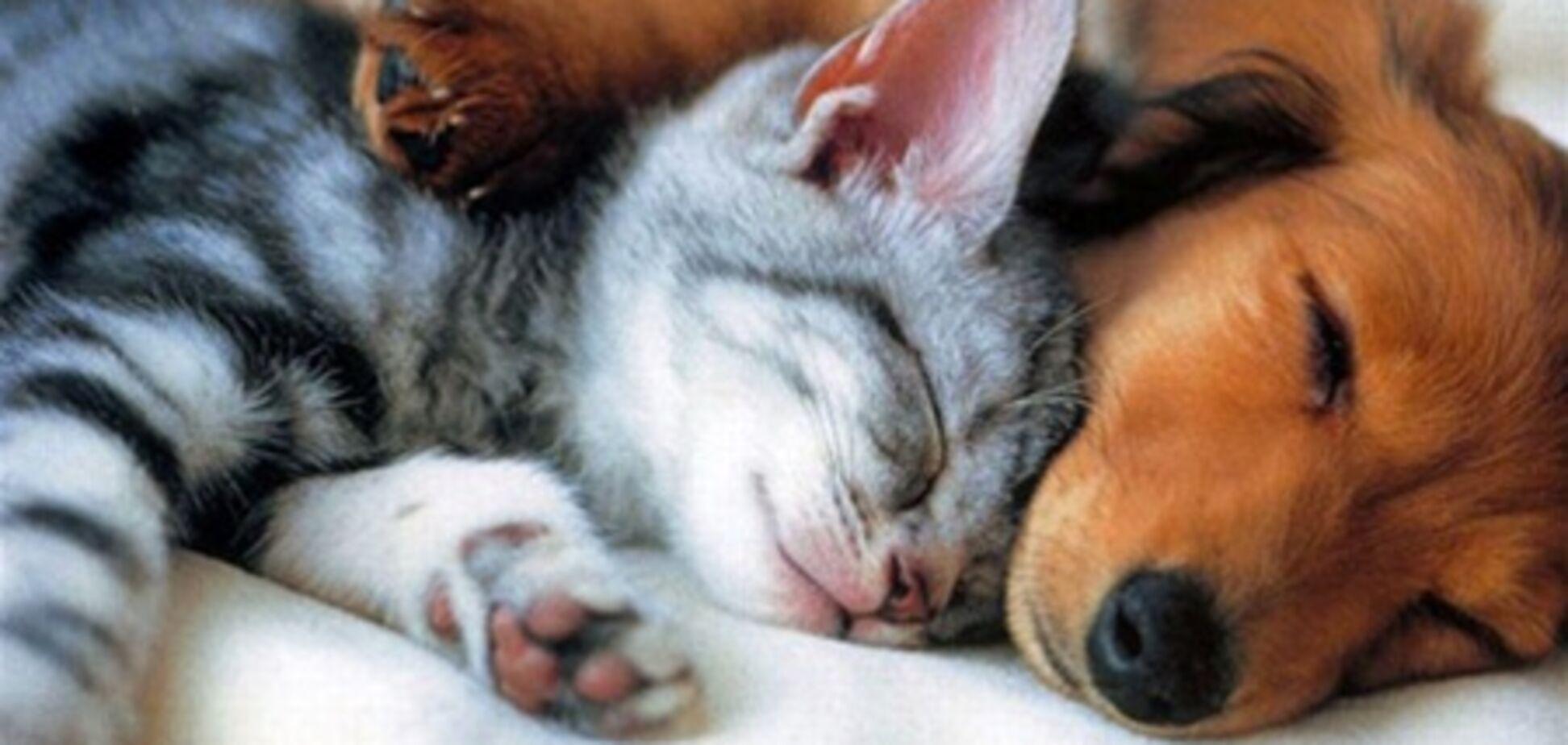 В Киеве запретили продавать кошек и собак