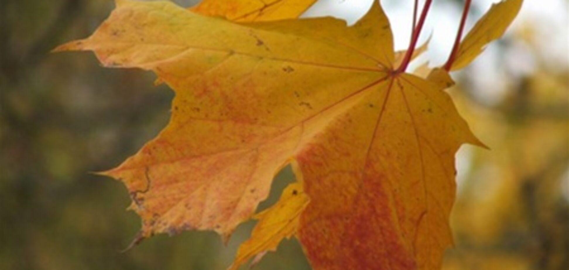 Тревожный октябрь: снос дач и нелепые смерти