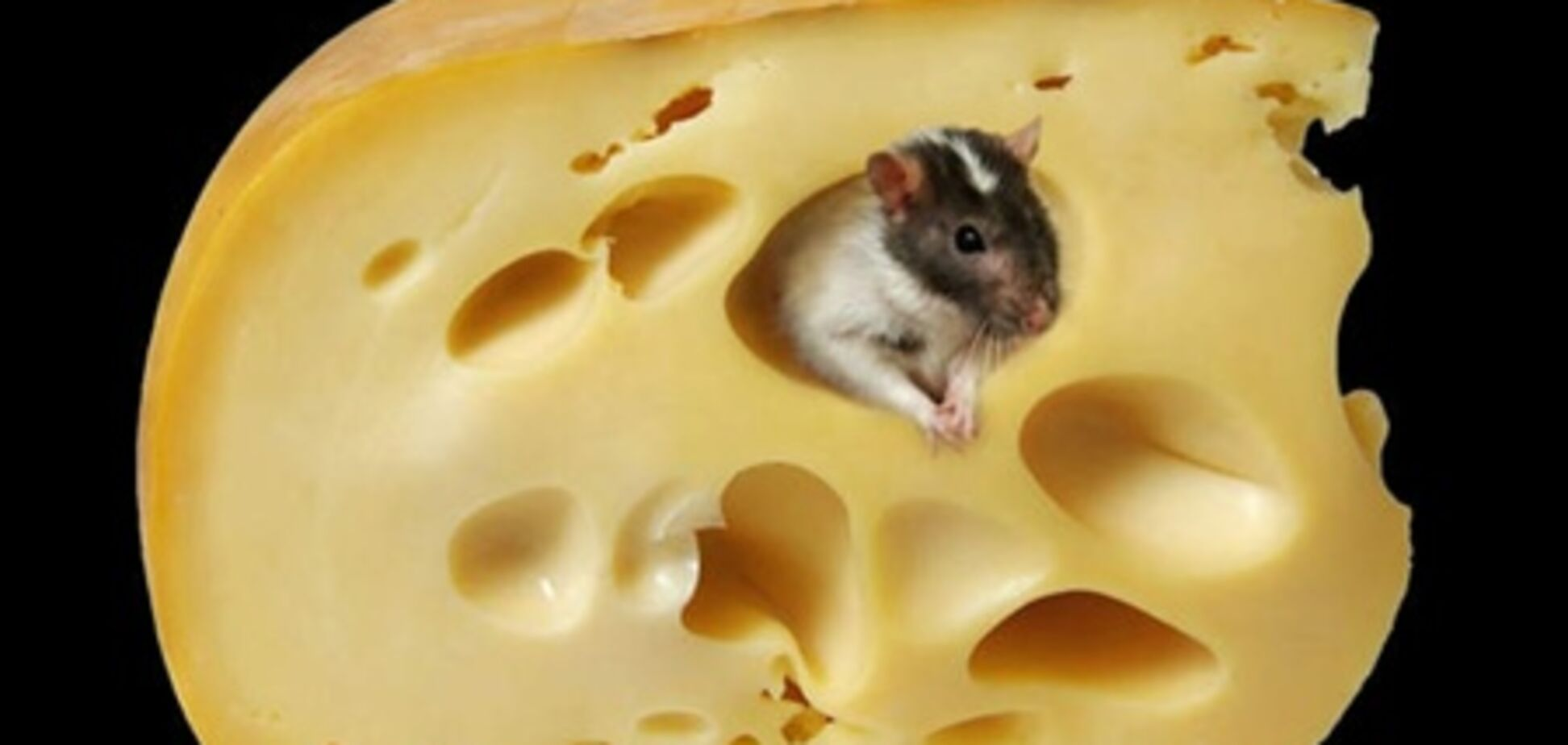 Київ попросить Москву довести погану якість сиру