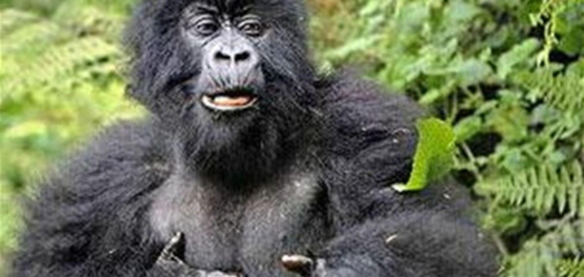 Мавпи і щури допомогли вченим пізнати природу сміху