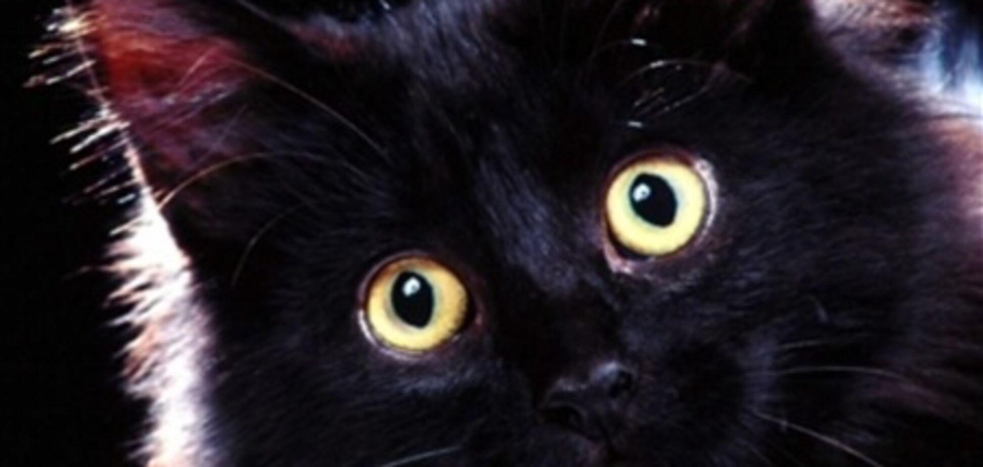 Бездомна кішка вижила після двох спроб приспати її
