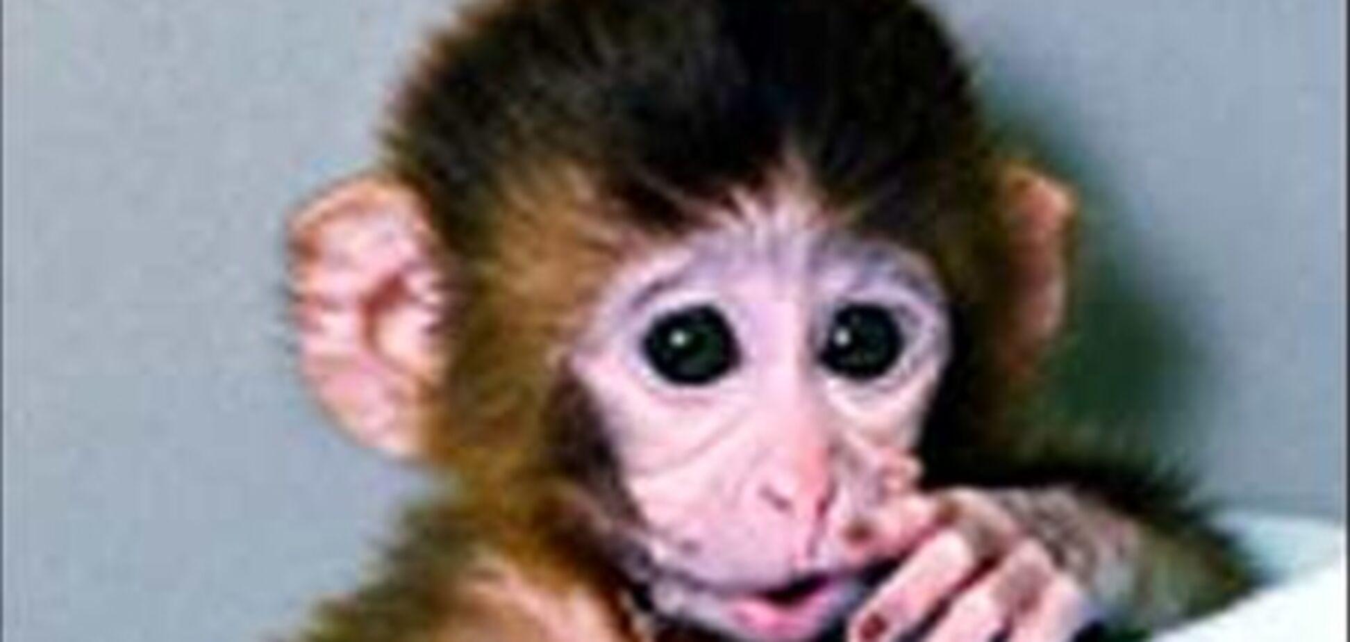 Американські вчені створили генетично модифікованих мавп
