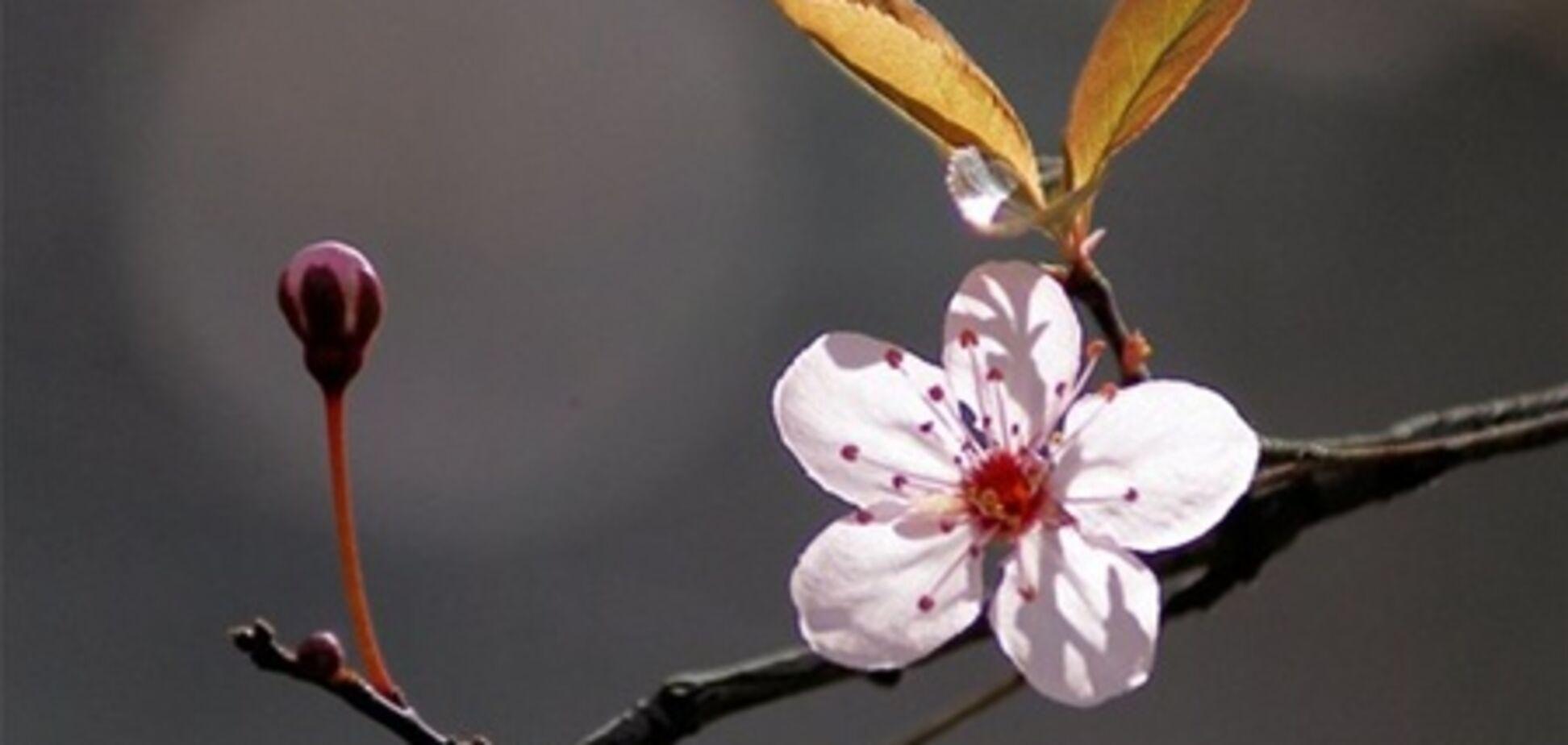 У Севастополі квітнева погода - розпустилися квіти