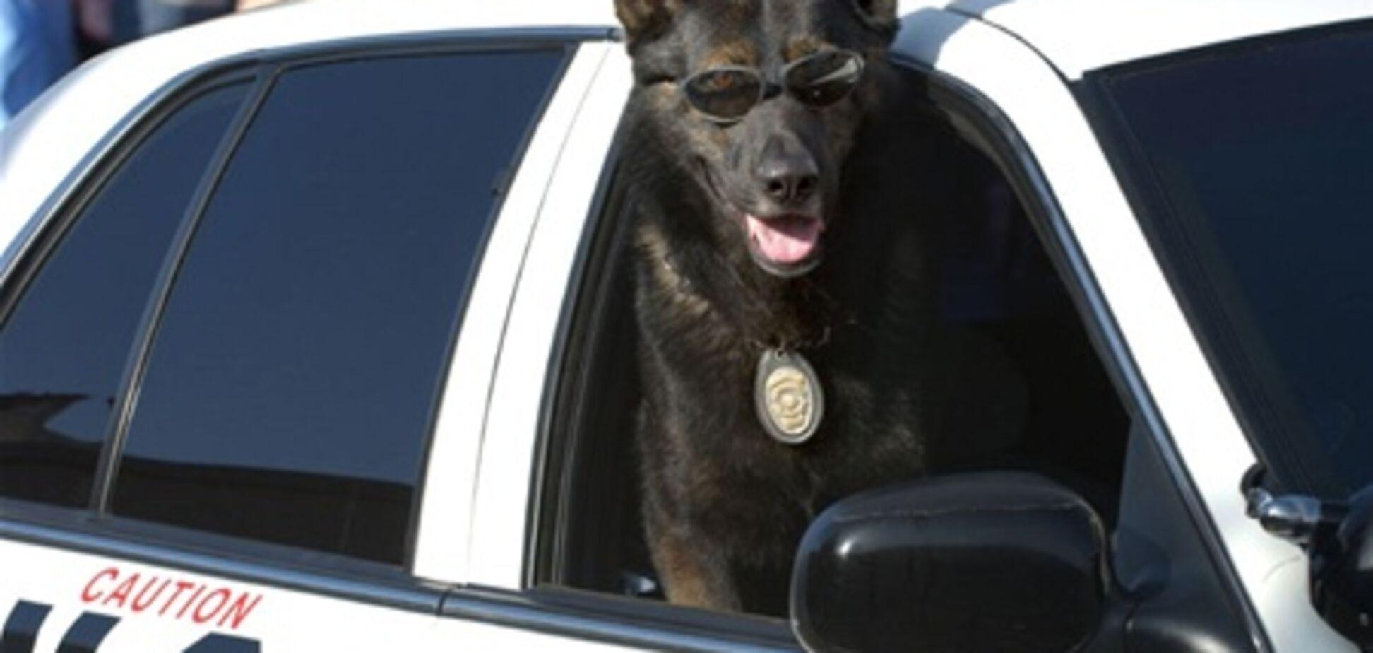 Поліцейська собака порушила Конституцію США