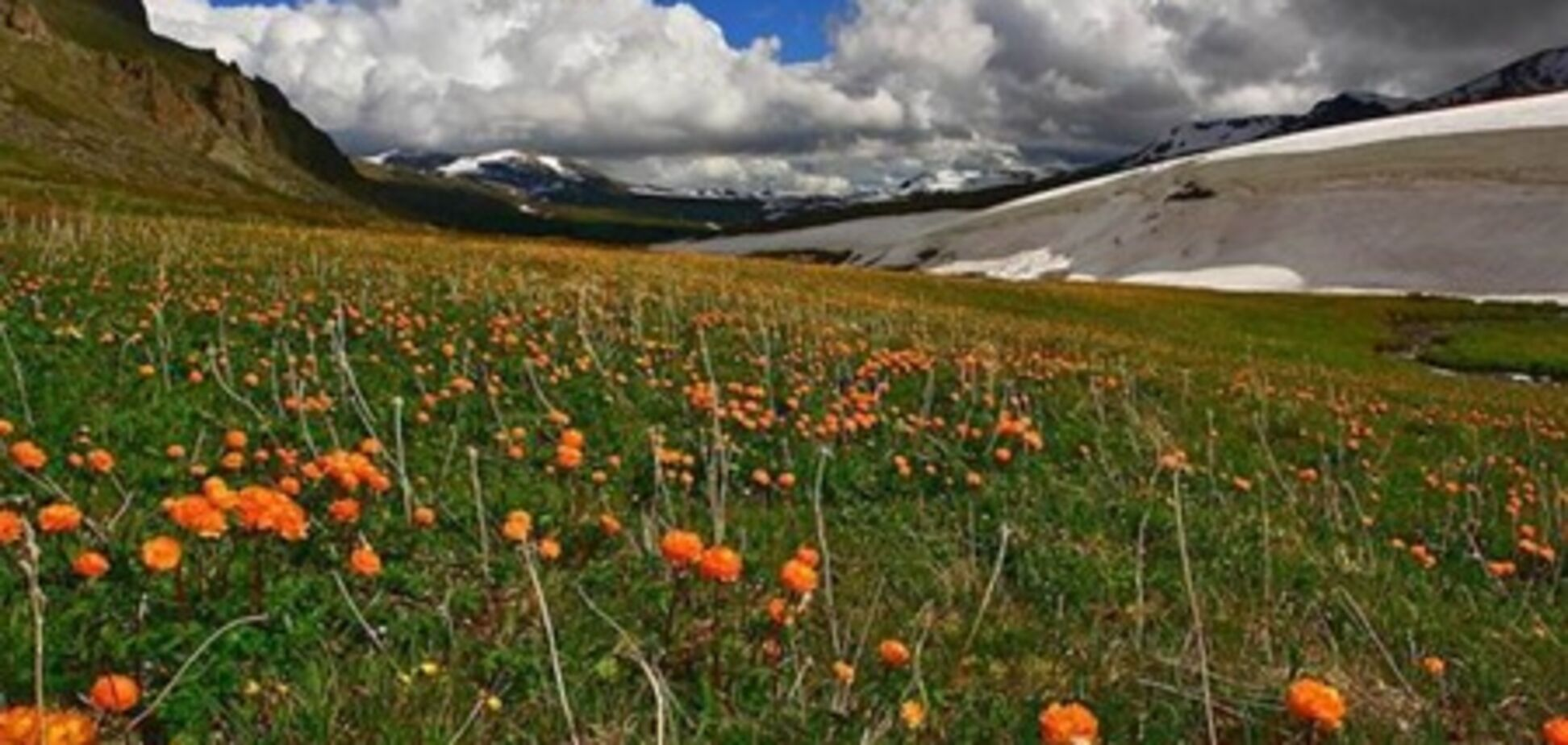 Вчені: альпійські луки перебувають під загрозою зникнення