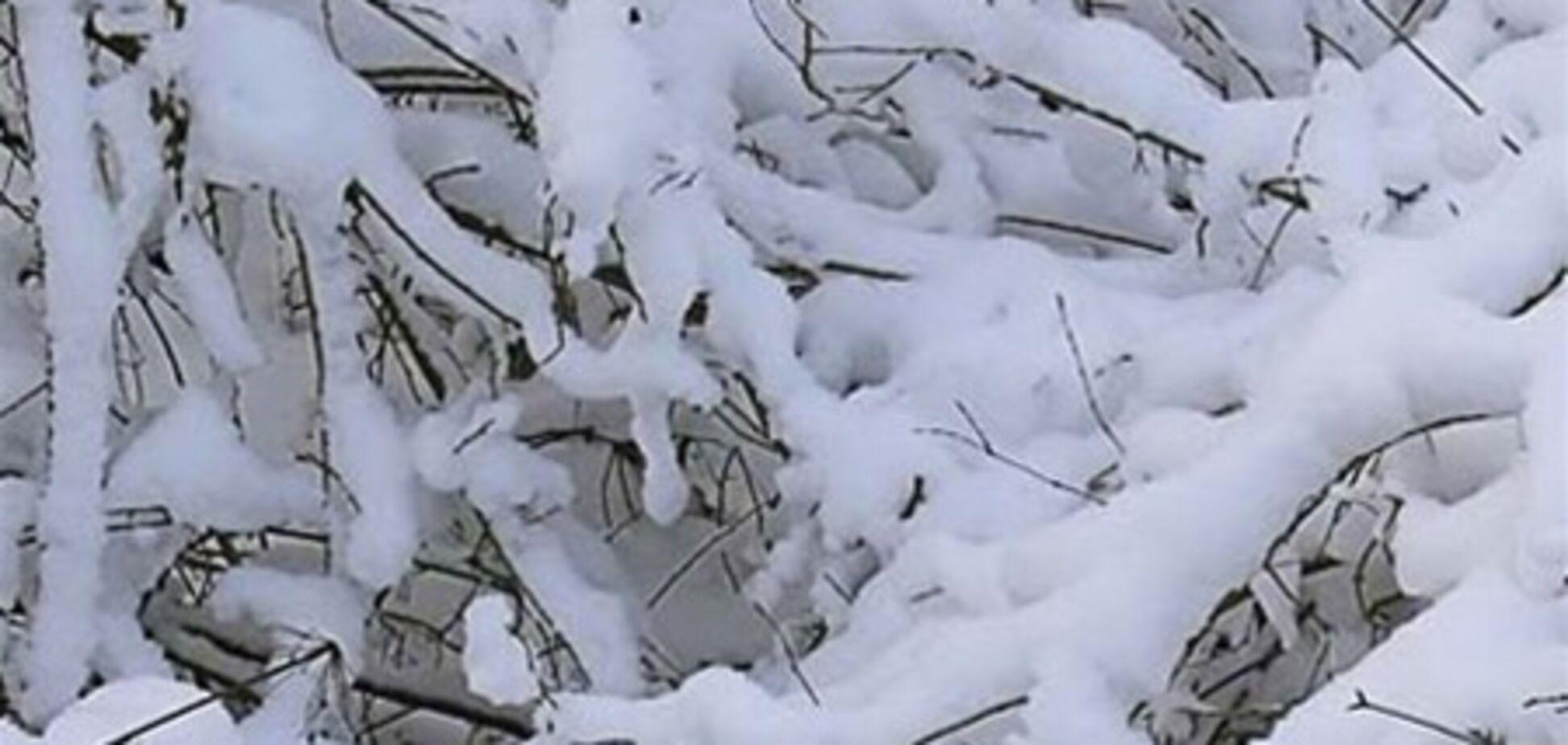 До 16 января в Украине будет тепло