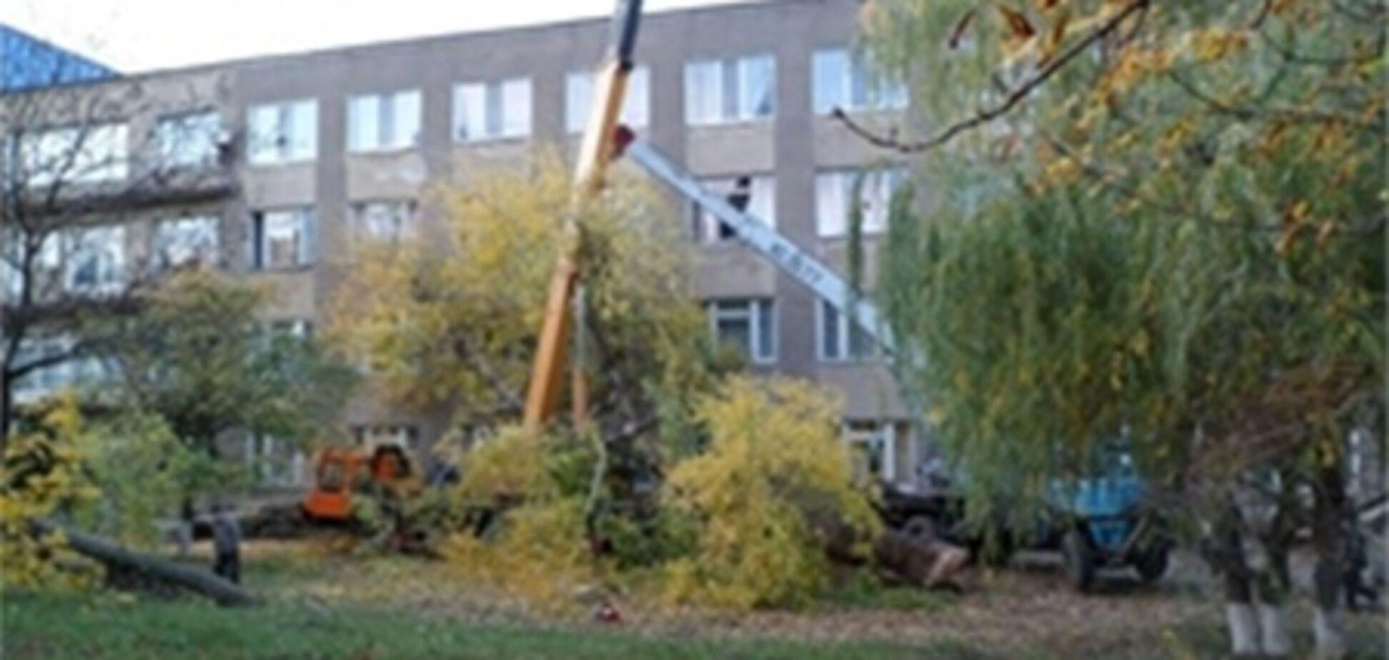 На Одесщине дерево упало на автокран и убило водителя
