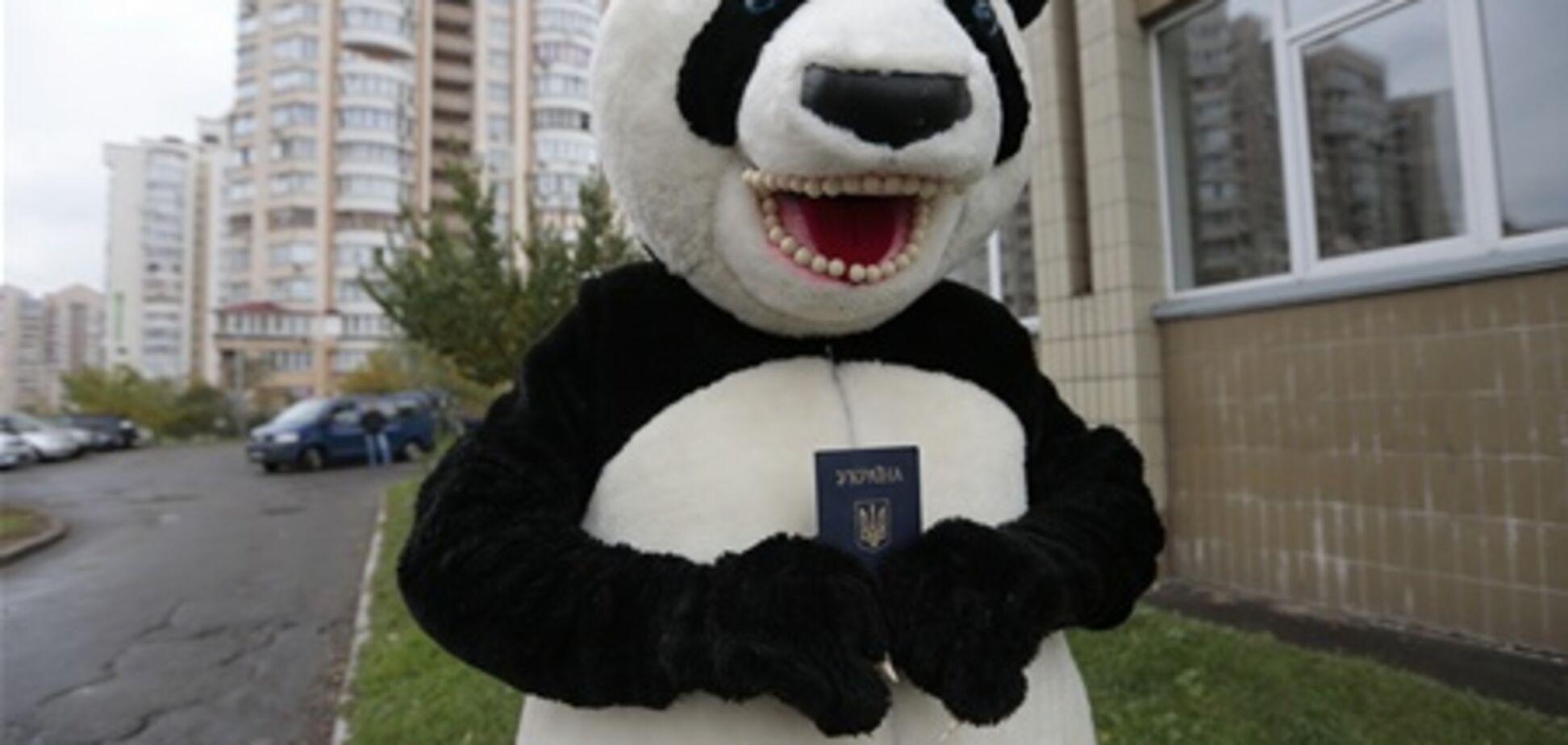 Хит Интернета - панда проголосовала на выборах. Видео
