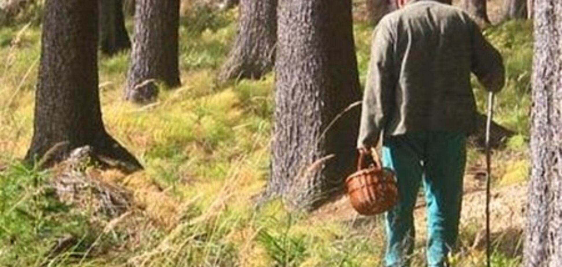 58 человек таки нашли заблудившегося в закарпатском лесу грибника