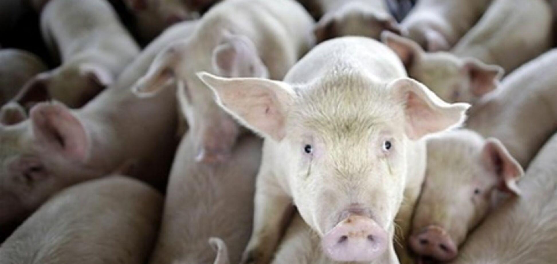 У Криму на фермі живцем згоріли півтори сотні свиней