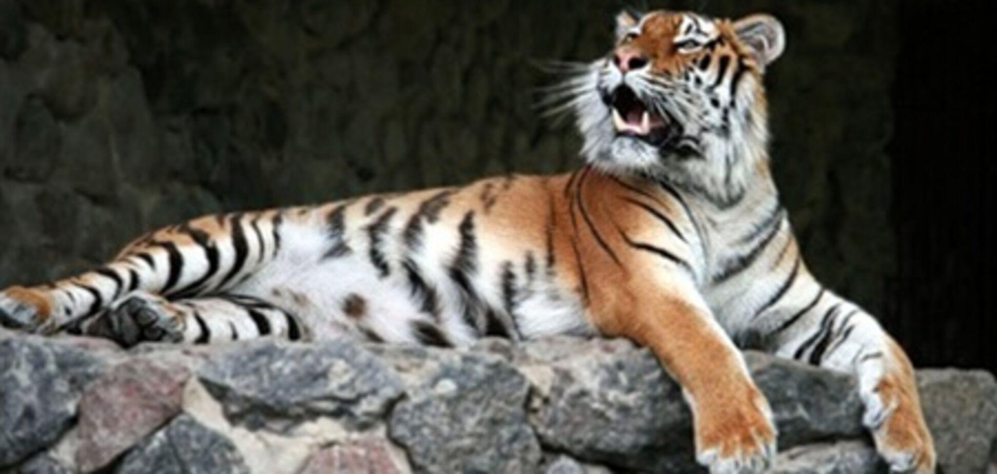 Стали известны подробности ЧП в Киевском зоопарке