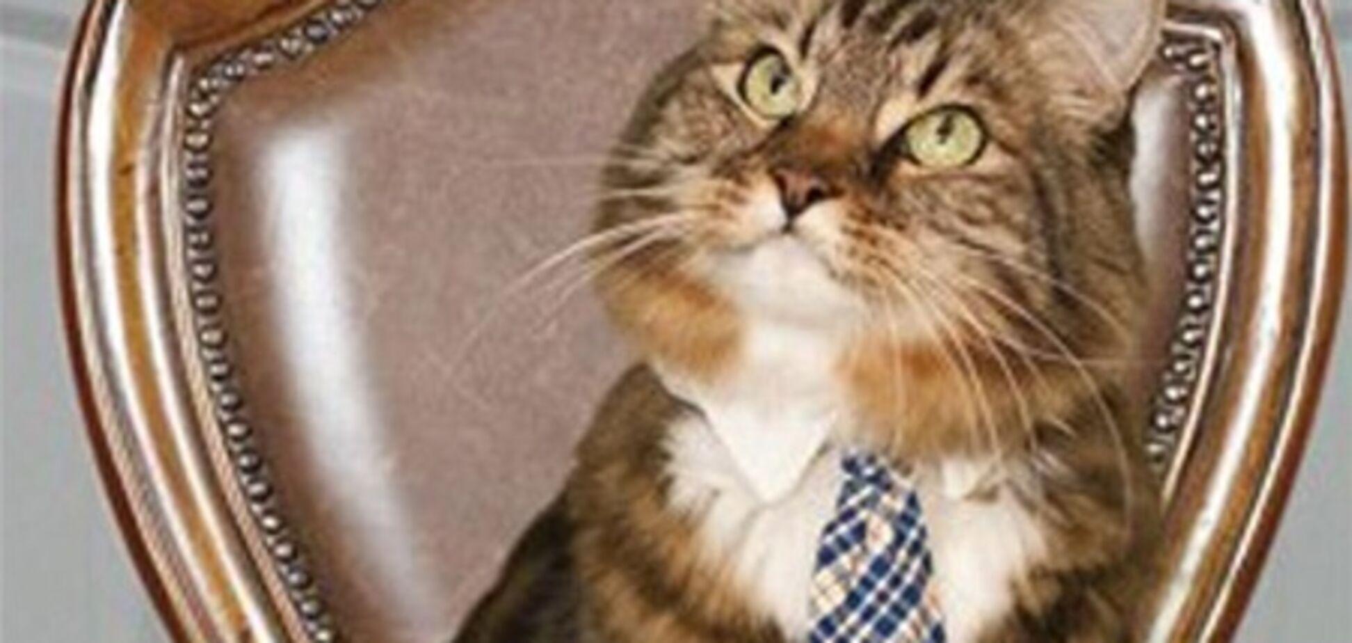 В США кот баллотируется в Сенат