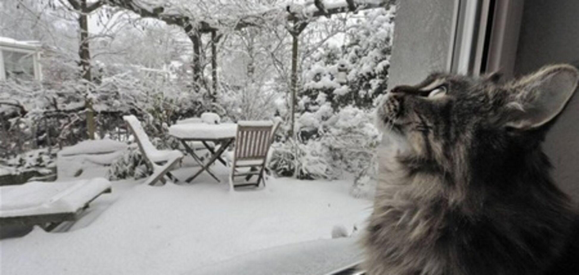 Кошка в 11-градусный мороз закрыла хозяев на балконе