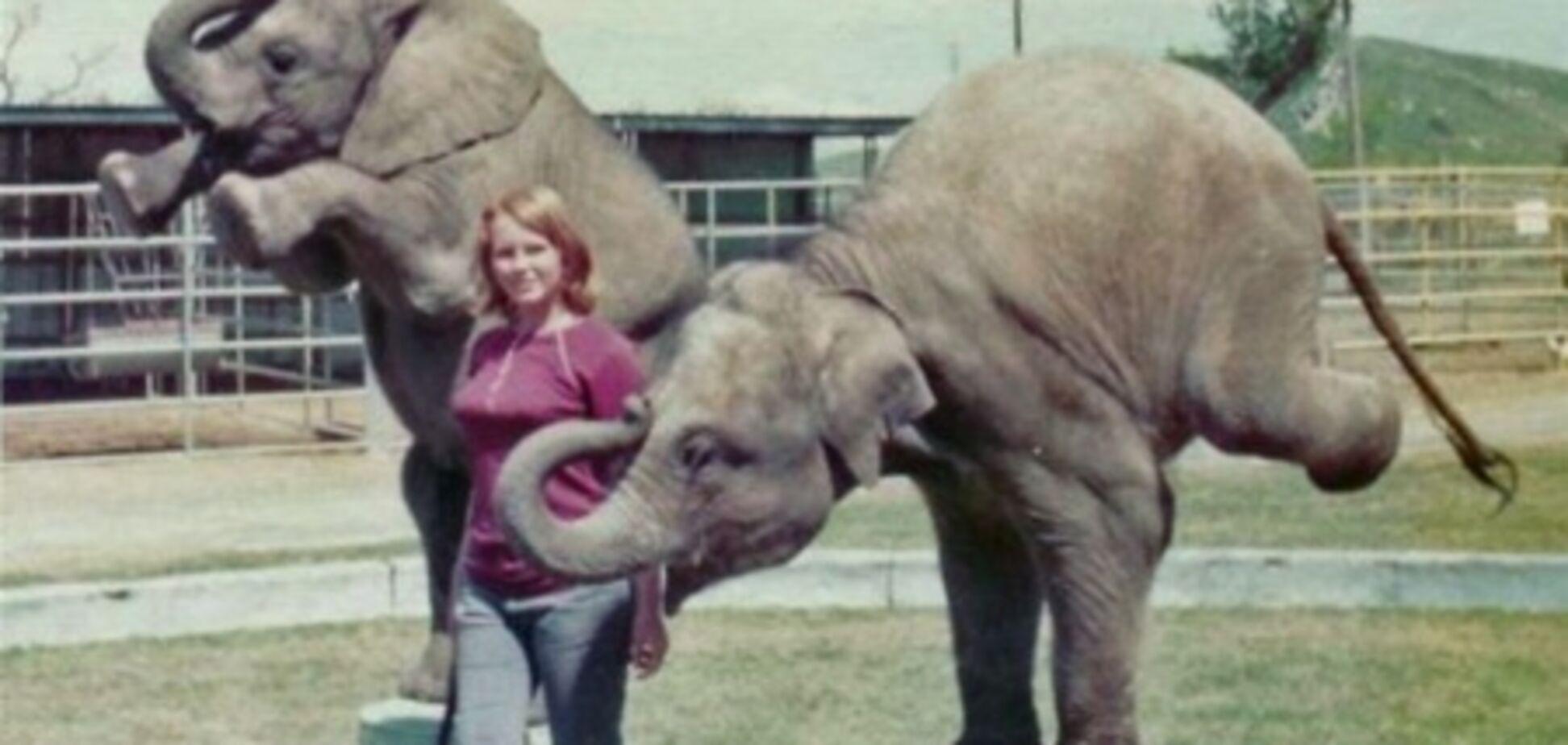 Циркових слонів від холоду рятують горілкою