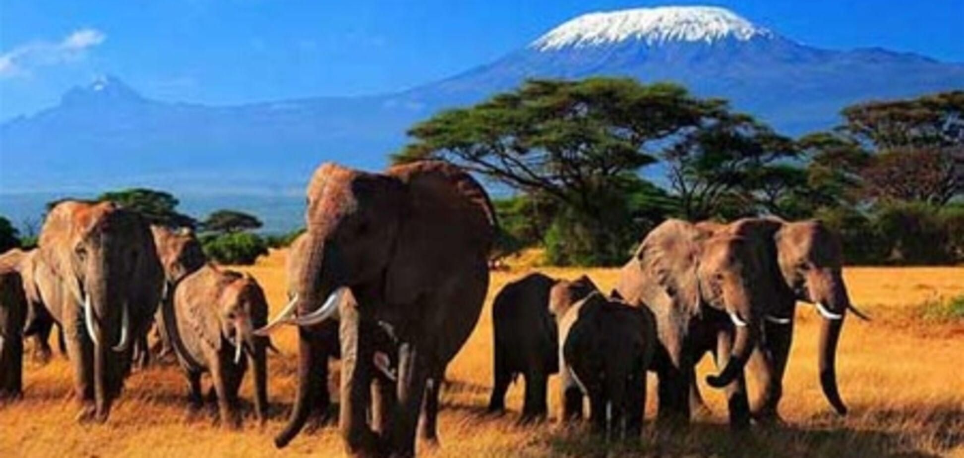 Кения гарантирует безопасный отдых