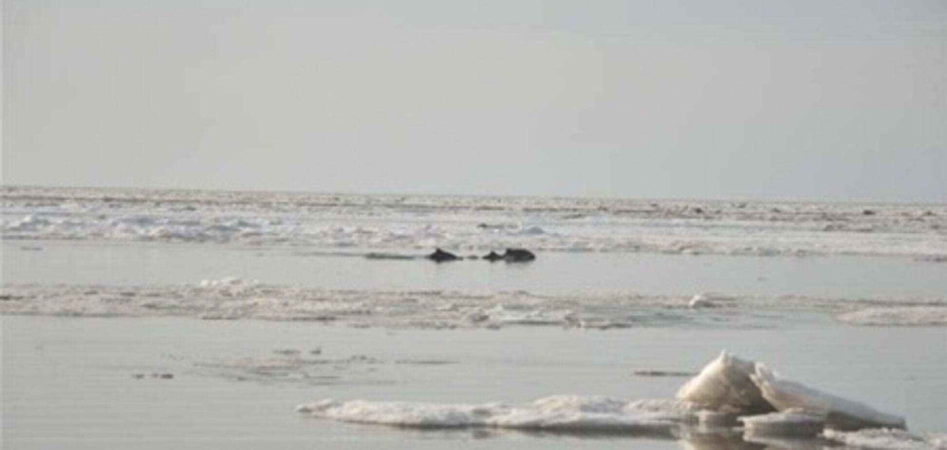 Співробітники МНС врятували дельфінів з крижаної пастки