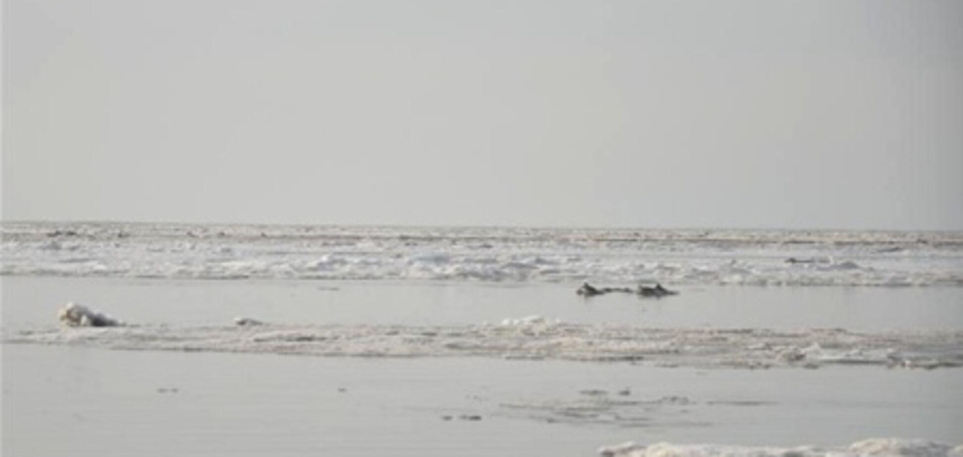 Злочевський витягнув дельфінів з крижаної пастки