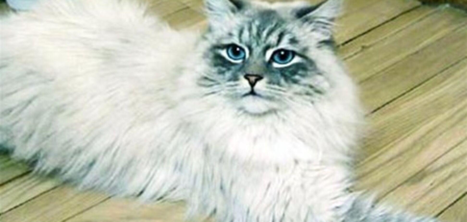 От Дмитрия Медведева сбежал кастрированный кот