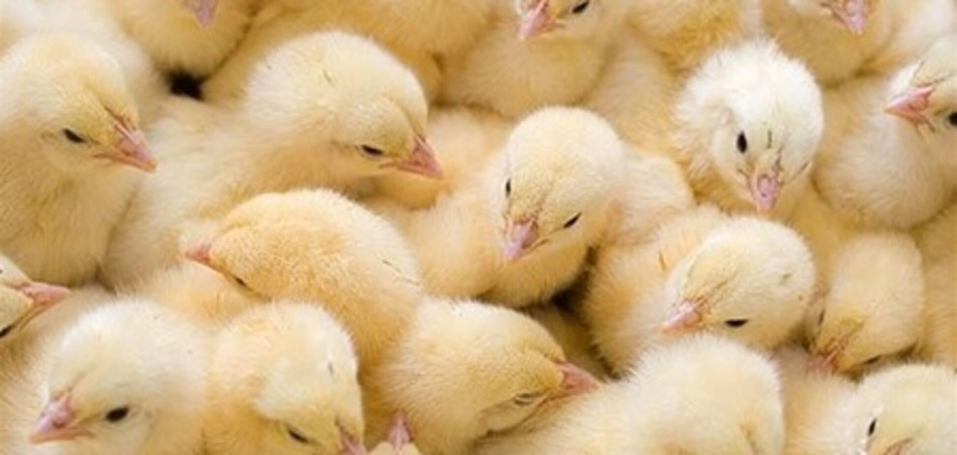 В Узбекистане учителям и медикам выдают зарплату цыплятами