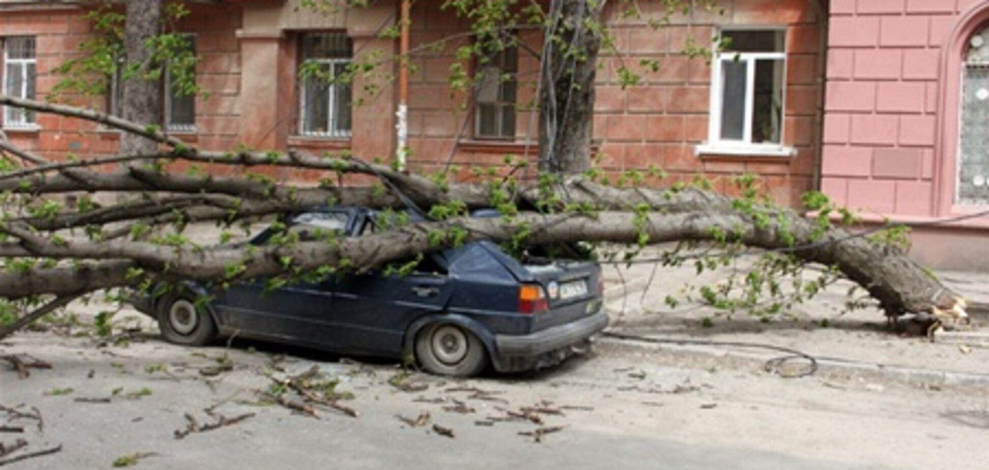 В Крыму ураган валит деревья и крушит автомобили