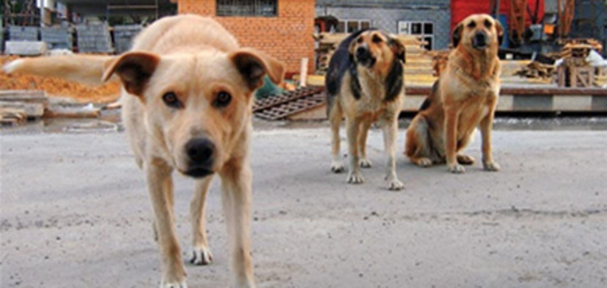 В Киеве опять травят собак