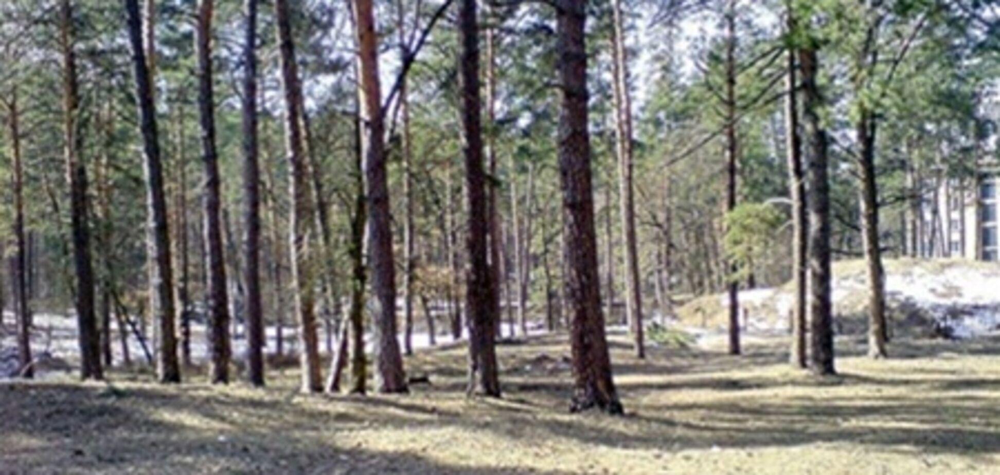 Киевсовет попросит Президента защитить Беличанский лес