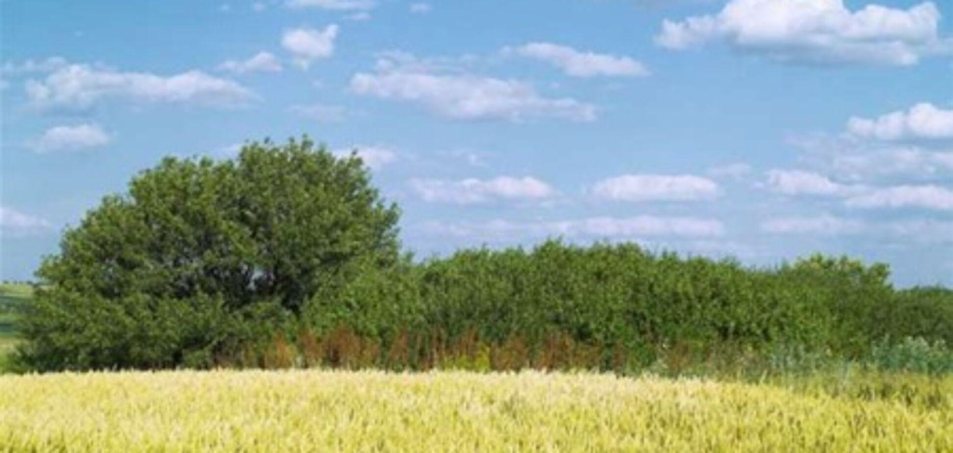 Земельный банк в Украине не нужен - Тигипко