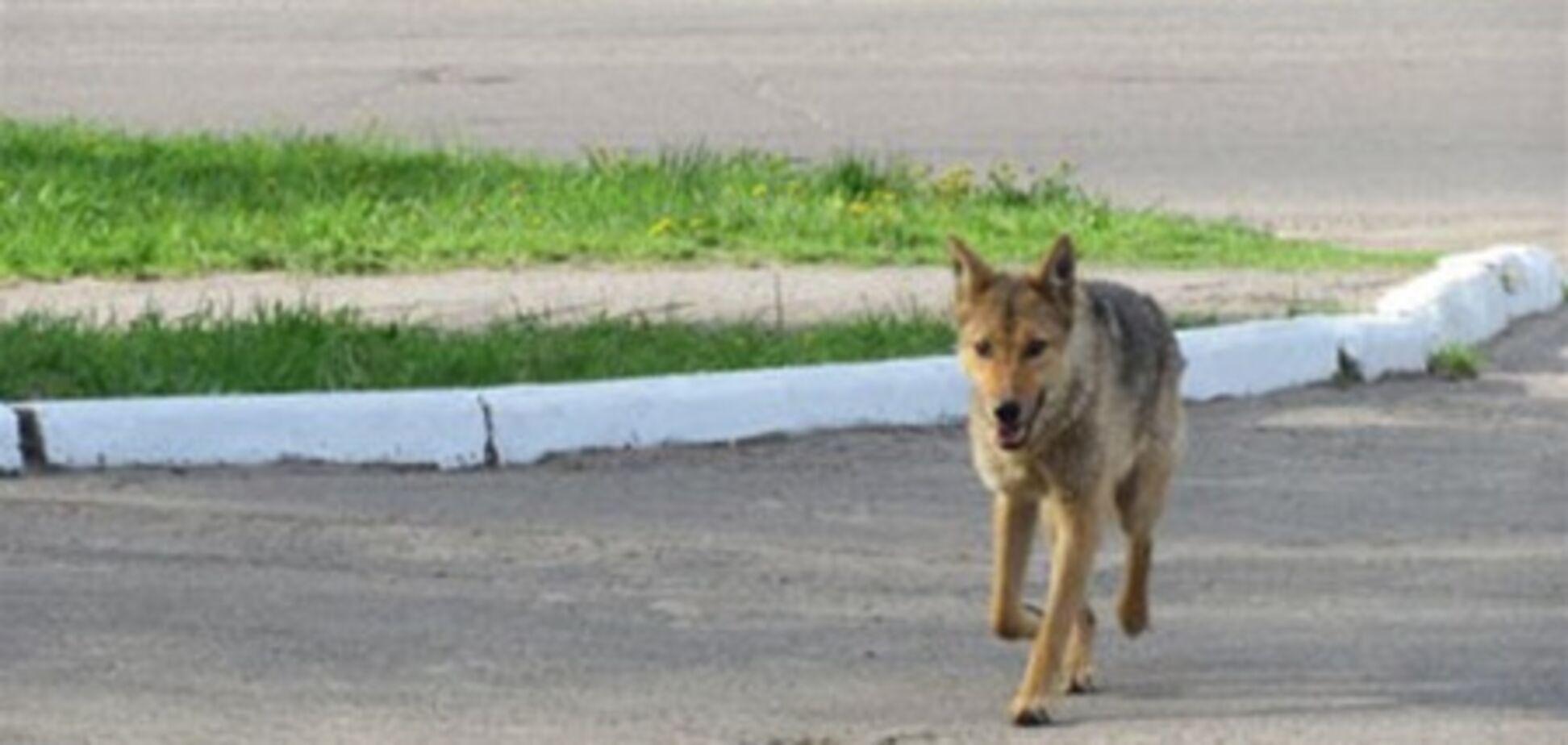 В Крыму волк забежал в село и покусал жителей