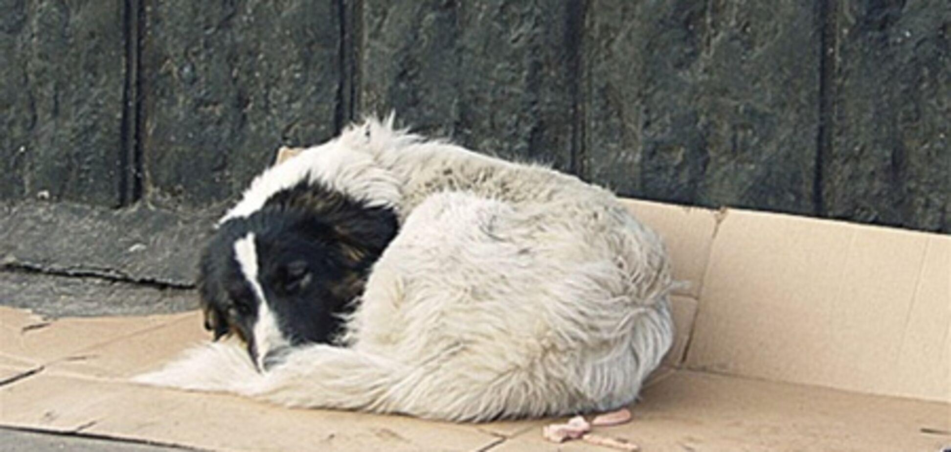 Бездомные животные: отравить, чтобы не мучить?