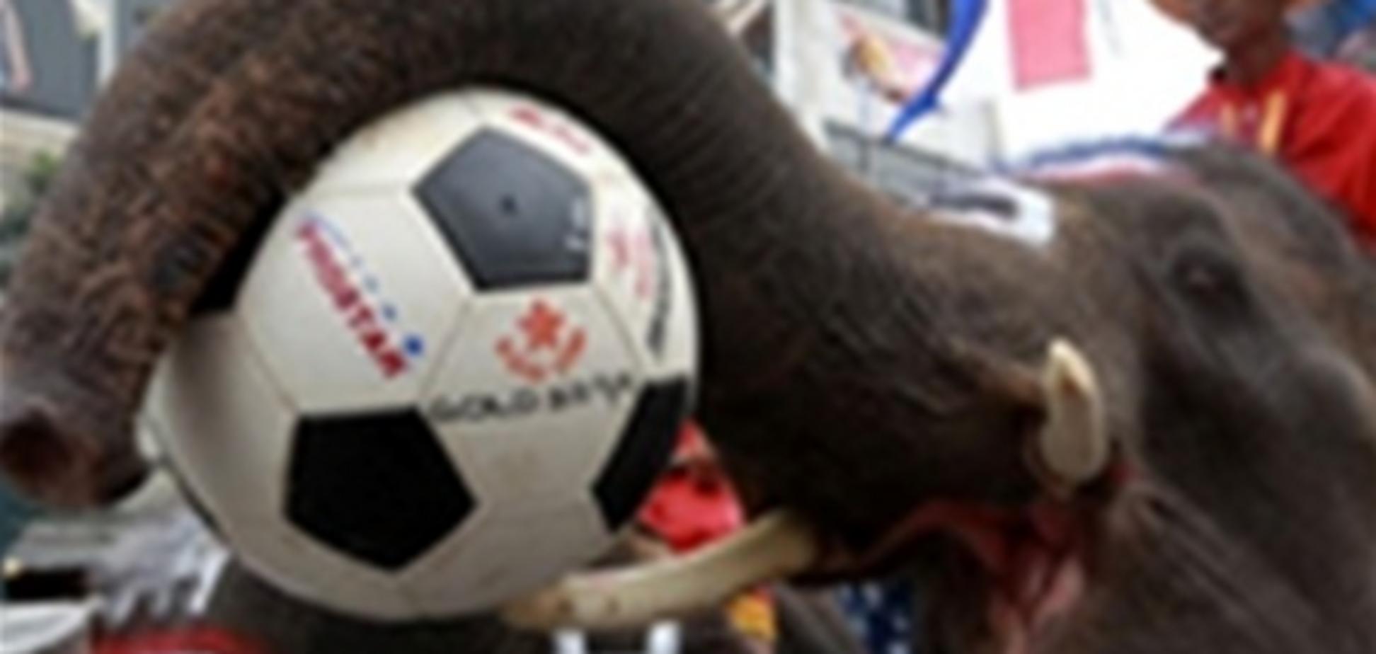 Евро-2012: На смену осьминогу-предсказателю Паулю пришла слониха Читта
