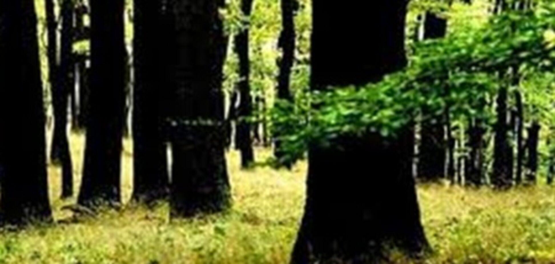 Мисливська камера 'зловила' політика за сексом в лісі