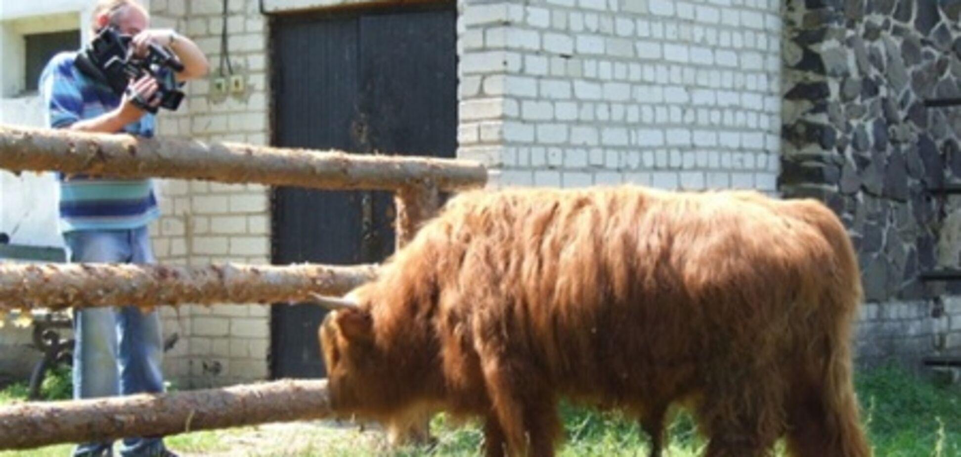У Рівненському зоопарку оселилося 'бидло скотське'