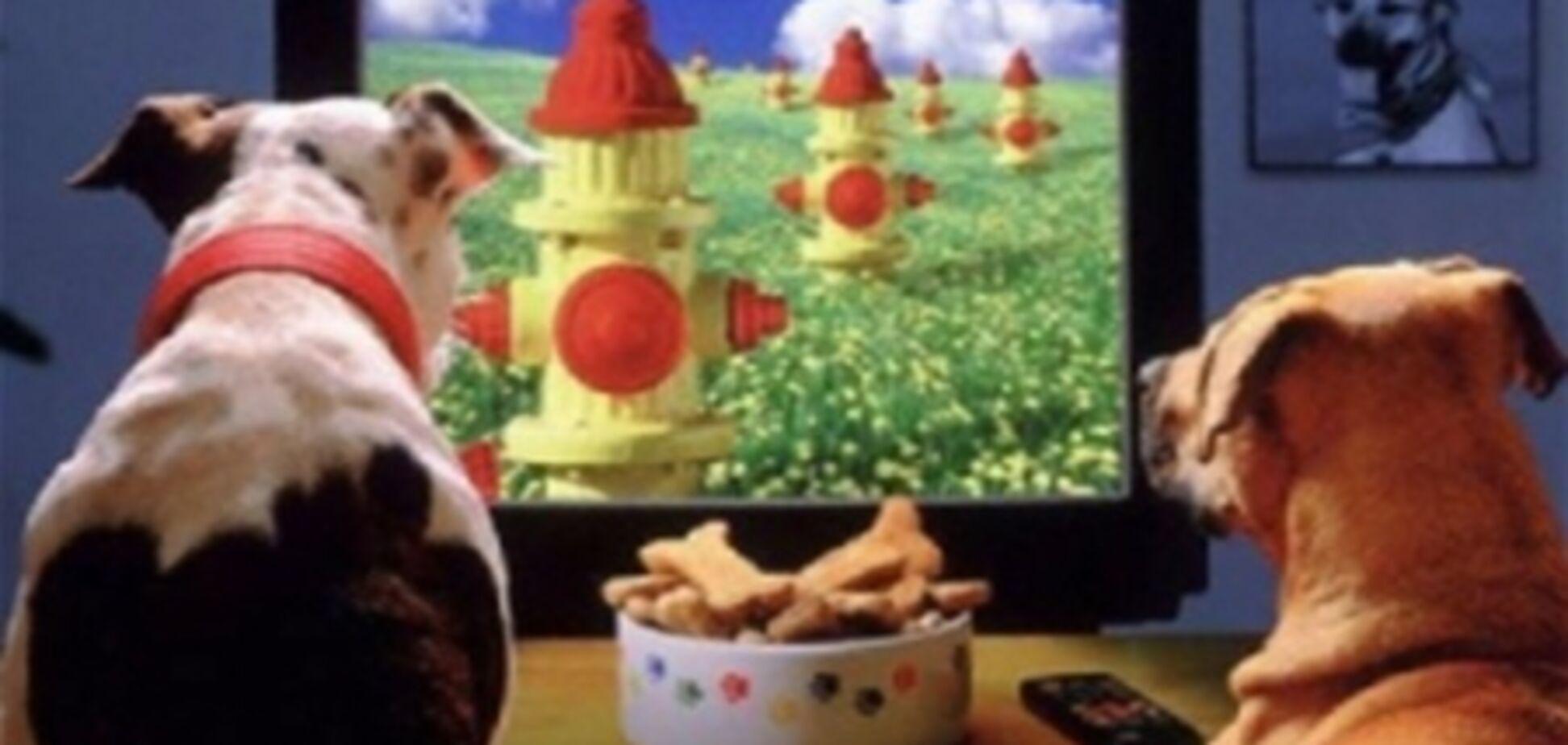В США запустили первый телеканал для собак. Видео