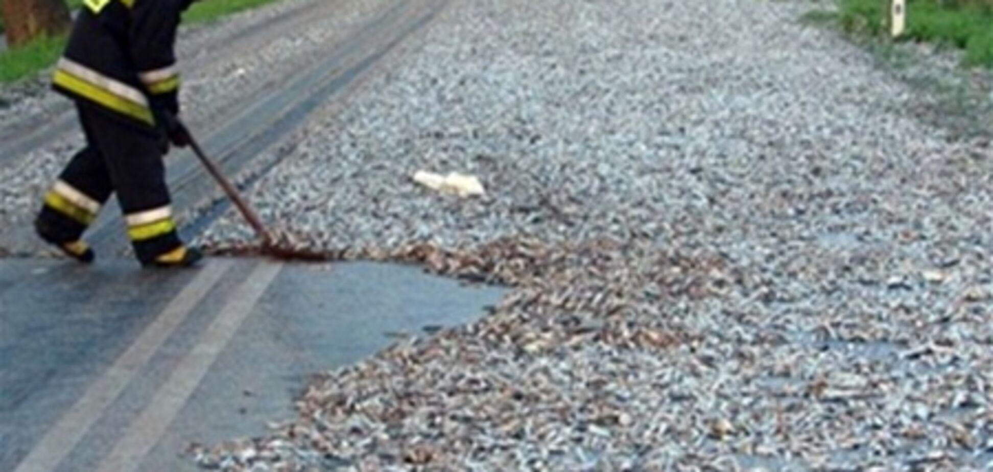 В Польше шоссе засыпало сардинами