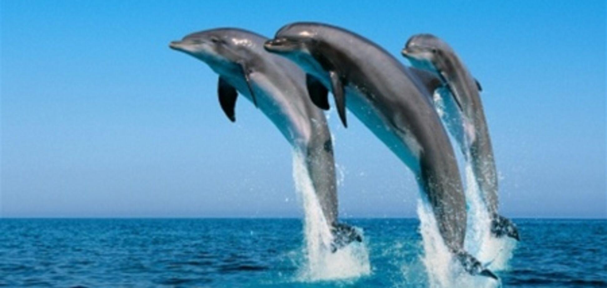 Дельфінів запідозрили у використанні нелінійної математики
