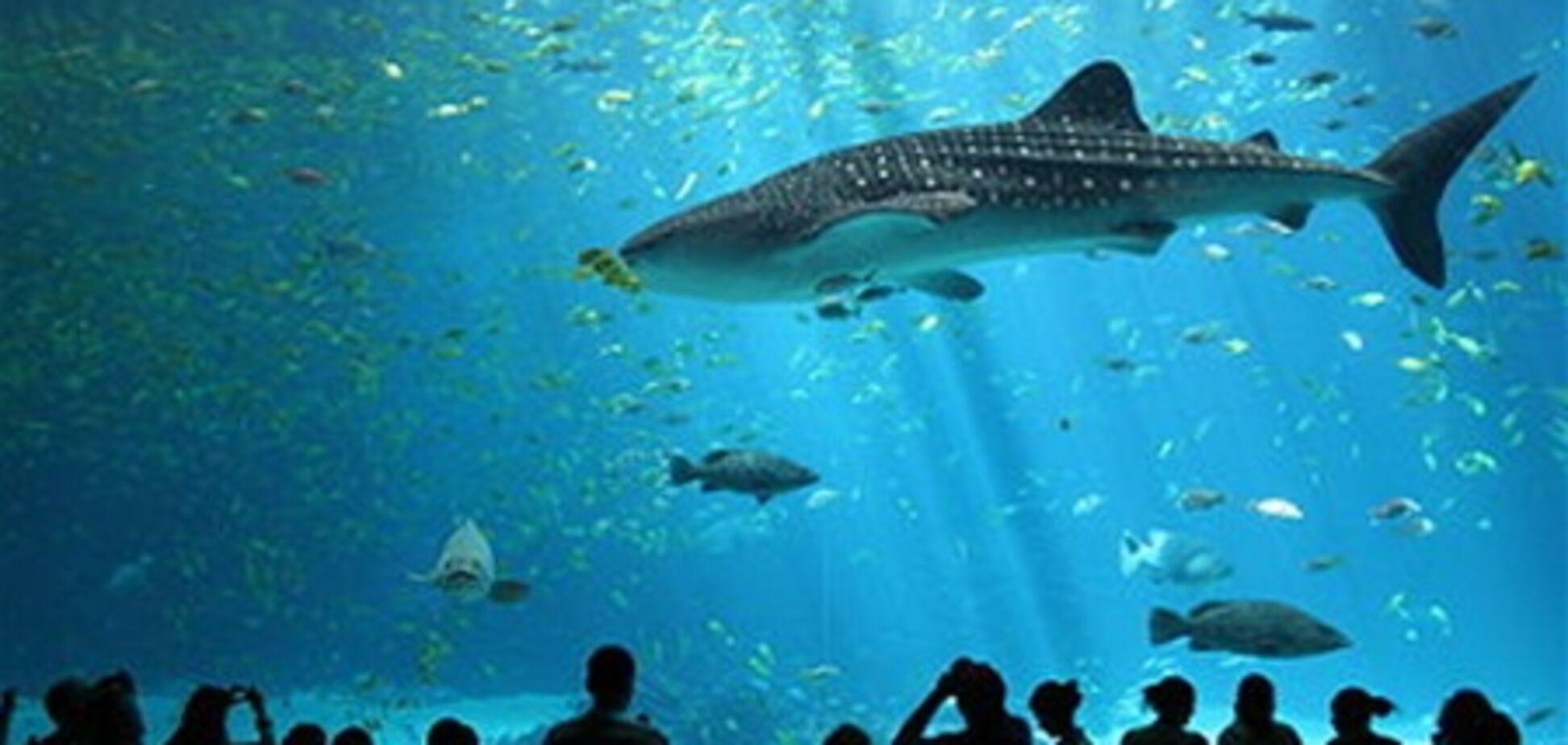 В Киеве построят океанариум за 60 млн. грн