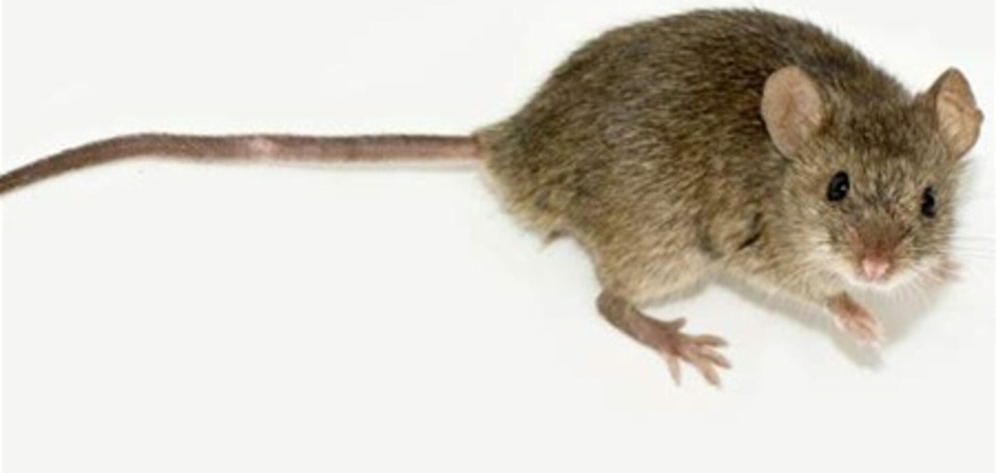 Канадець випадково вистрілив у себе під час полювання на мишу