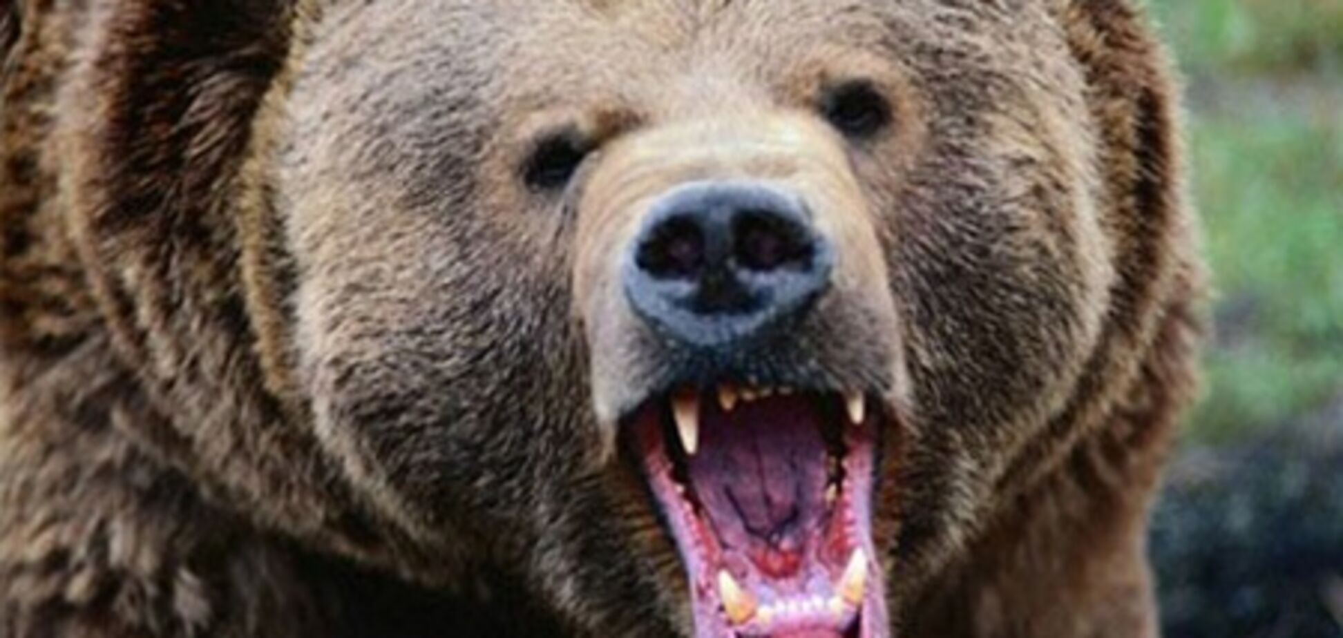 В Норвегии в дом вломились медведи: съели мед и выпили 100 банок пива