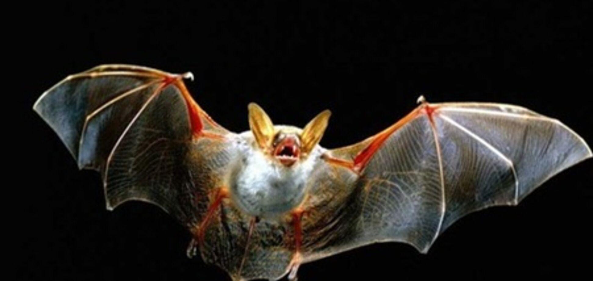 Миланцы будут размножать летучих мышей для борьбы с комарами