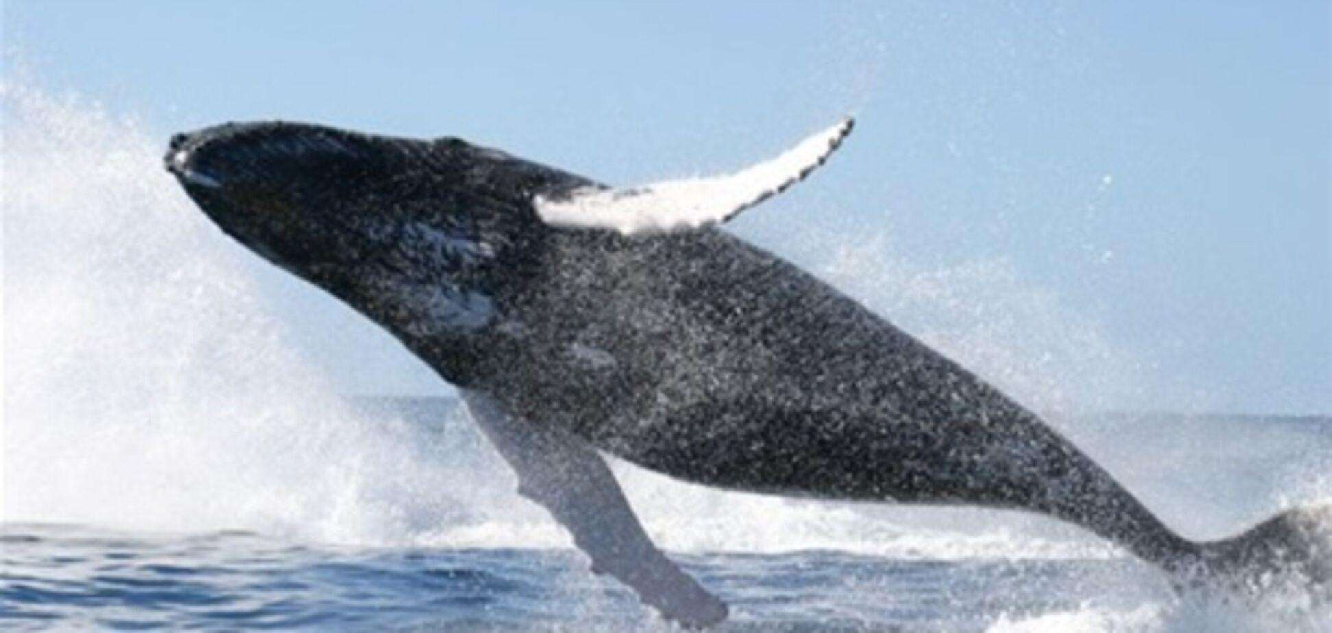 Австралійця оштрафували за катання на киті