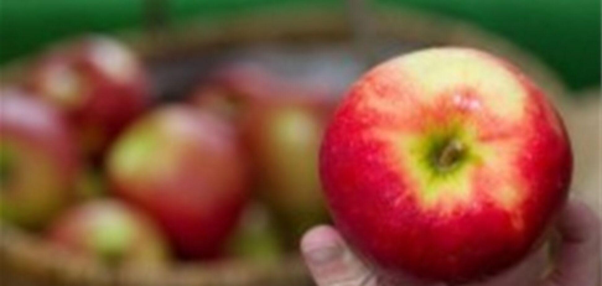 Медовый и яблочный спас: древние приметы, новые рецепты