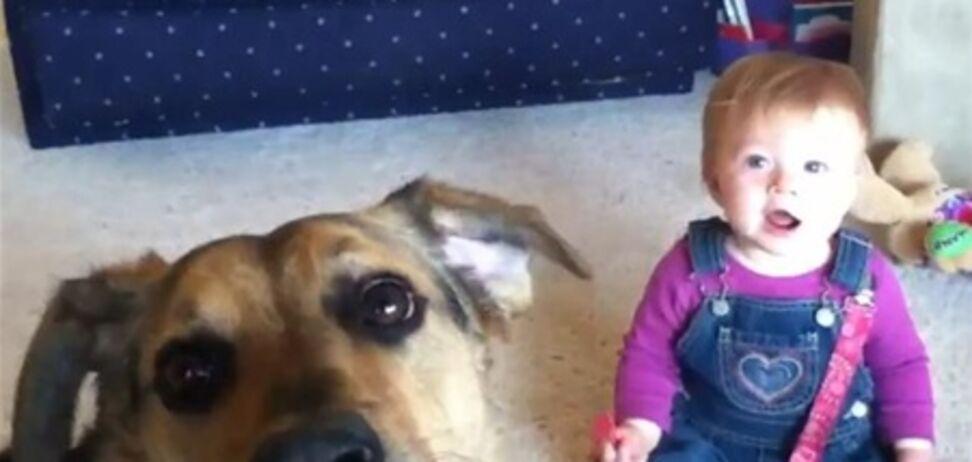 Топ-5 гарантирующих улыбку видео о детях и собаках